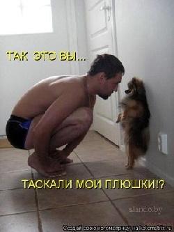 фото взрослой собаки той-терьер